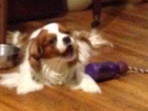 Bijou with her tug-a-jug