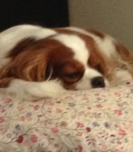 Bijou on her pillow